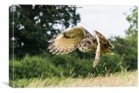 Unusual view of an Eagle Owl, Canvas Print
