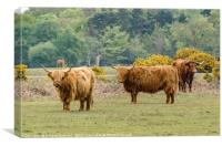A Trio of Highland Cattle in the New Forest, Canvas Print