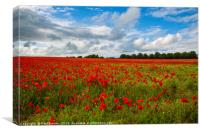 Sea of Poppies , Canvas Print