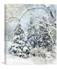 Snow Covered Forest, Canvas Print