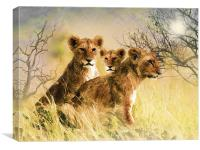 Lion Cubs Relaxing, Canvas Print