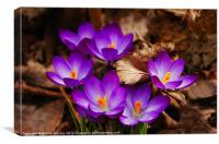 The First Signs of Spring, Canvas Print