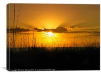 Golden Sunset, Canvas Print