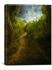 Follow the Path, Canvas Print
