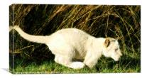 learning to pounce, Canvas Print