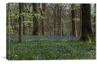 Soudley Bluebell Woods, Canvas Print