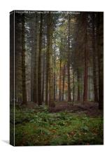 Deep in the Forest , Canvas Print