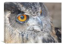 The Eye of the Owl, Canvas Print