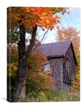 Old Shack, Canvas Print