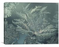 Frost on an old window, Canvas Print