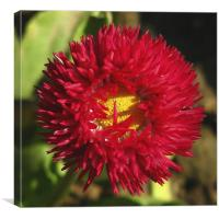 Ball of Fire, Canvas Print
