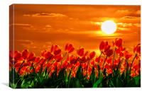 Valentine sunset red tulips flowers, Canvas Print