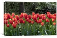 Fence of red tulips flowers, Canvas Print