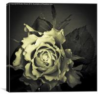 Olde World FLower, Canvas Print