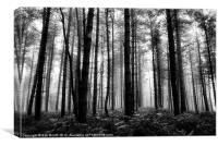 'Misty Woods', Canvas Print