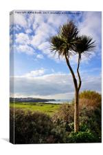Fistral Palm , Canvas Print
