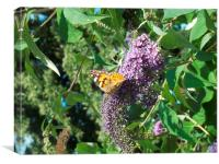 Shiny Painted Lady!, Canvas Print