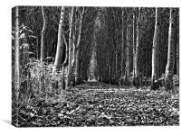 Tree Cathedral, Canvas Print