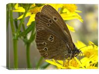 Resting Butterfly 2, Canvas Print