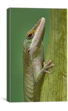 Green Anole, Canvas Print