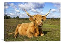 Highland Cattle in New Forest, Canvas Print