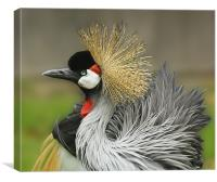 Great Crested Crane, Canvas Print