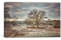 Winter Scene at Bolderwood New Forest, Canvas Print