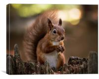 Red Squirrel on Brownsea Island, Canvas Print