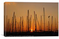 Maritime forest, Canvas Print
