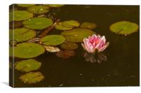 WATER LILY REFLECTION 2, Canvas Print