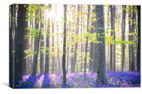 The Hallerbos (Dutch for Halle forest) is a forest, Canvas Print