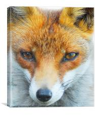 Foxy Lady, Canvas Print