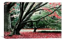 Autumn Leaves Westonbirt, Canvas Print