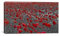 Poppy field selective colouring, Canvas Print