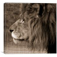 African King, Canvas Print
