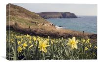 Daffodils looking out to sea, Canvas Print