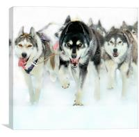 The leader of the pack, Canvas Print