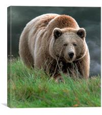 Bear with me, Canvas Print