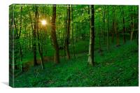 Bluebell Woods at Sunset, Canvas Print