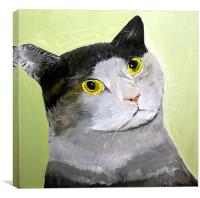 WIDE EYED CAT, Canvas Print