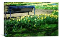 Daffodils and a bench, Canvas Print