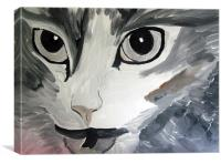 cats angry eyes painting, Canvas Print