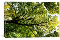 In the tree canopy, Canvas Print