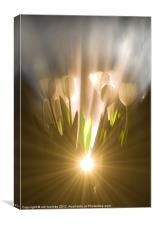 ILLUMINATED TULIPS, Canvas Print