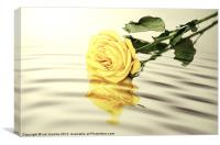THE ROSE, Canvas Print