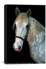 A HORSES PORTRAIT, Canvas Print
