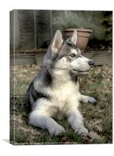 PORTRAIT OF A HUSKY, Canvas Print