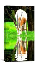 reflected, Canvas Print