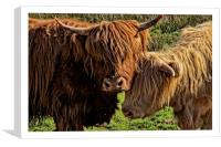 Highland cattle Arran, Canvas Print