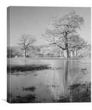 Field Of Flood, Canvas Print